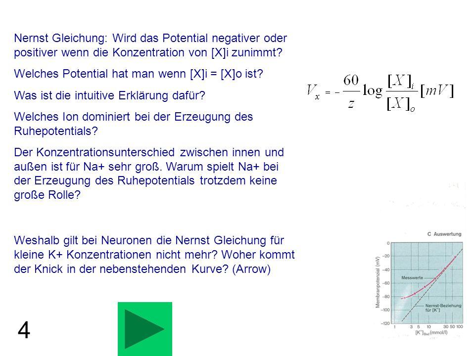 Nernst Gleichung: Wird das Potential negativer oder positiver wenn die Konzentration von [X]i zunimmt